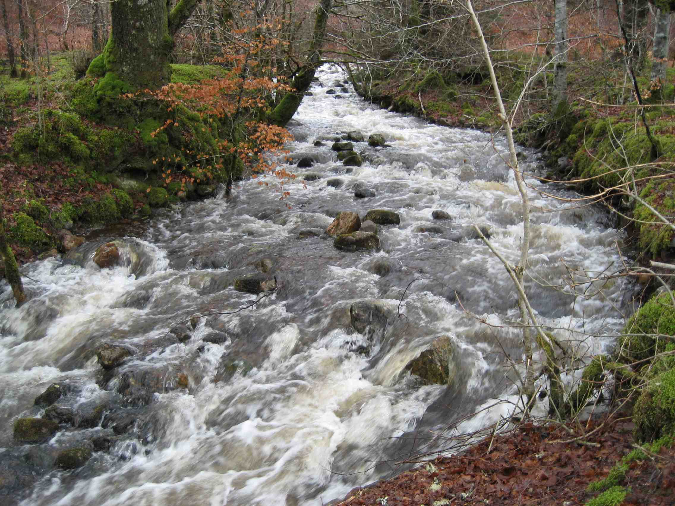 The White Waters DS14%20Raging%20river